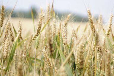 Ukraine effected agricultural land market